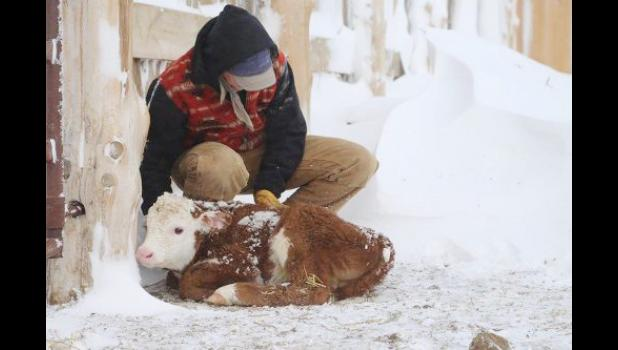 """Robin Reinhold won the first place and also overall winner in the recent Farm Bureau photo contest with """"A Warm Heart."""""""